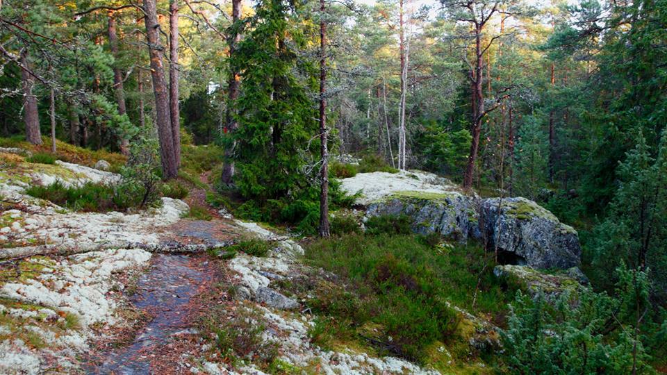 Täällä voisi leikkiä piilosta Kuvat: Jarmo Nieminen